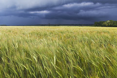 Stormy day. Stock Photography