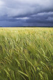 Stormy day. Royalty Free Stock Photo