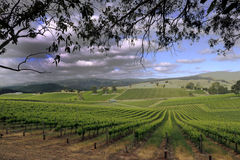 Stormy day in the Vineyard Royalty Free Stock Photography