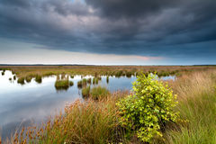 Stormy evening at swamp Stock Image