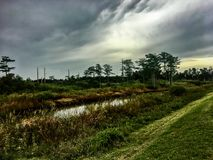 Stormy and hazy day in the swamps. Autumn day in the swamps of Florida Royalty Free Stock Image