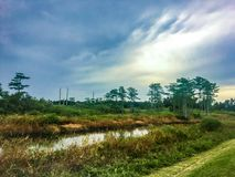 Stormy and hazy day in the swamps. Autumn day in the swamps of Florida Stock Photo