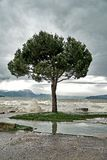 The waves breaks on the embankment of Lake Garda during a storm and pours a lonely tree royalty free stock images