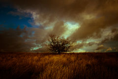 A stormy lit landscape with tree Julian Bound Stock Photos