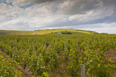 Stormy Loire vineyards Stock Images