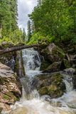 Stormy mountain river in the forest in Altai, Russia.  stock image