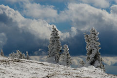 Stormy mountain. Snow covered pine trees against stormy clouds in the mountains Royalty Free Stock Photos