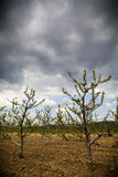 Stormy orchard Stock Photos