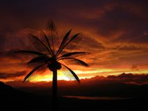 Stormy Palms. A silhouette of a palm tree against the stormy skies in the beginning of the Indian monsoons Stock Photo