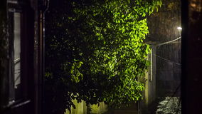 Stormy Rain In The Yard At Night. This is a shot of stormy rain falling and moving a green tree illuminated with street light in the yard at a house at night stock footage