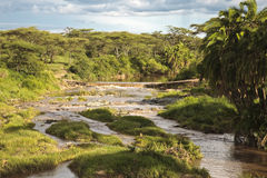 Stormy River of the African savannah Stock Photos