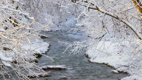 A stormy river is not covered by ice in winter. Above the river the trees bent branches under the weight of snow stock video