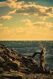 Shoreline Stock Photos