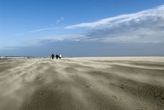 Stormy Schiermonnikoog beach. A sunny winterday on Schiermonnikoog beach with sand storming over the beach Royalty Free Stock Image