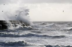 Stormy Sea. Waves crashing into harbour wall with some seagulls Stock Photography