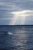 Stormy sea. Stock Photos