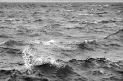 Stormy sea. In black and white royalty free stock photos