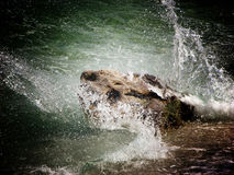 Stormy sea and rock in Ika,Croatia Royalty Free Stock Photo