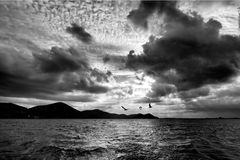 Stormy sea shore with seagulls - black and white monochrome Royalty Free Stock Images