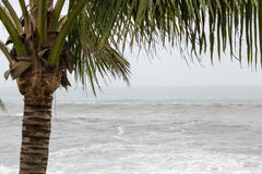 Stormy sea during typhoon Stock Photo