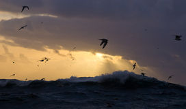 Stormy seas with seagulls. Seagull silouettes on a stormy seascape stock image