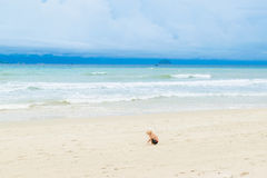 A baby drawing on the sand at the bech alone, Vietnam, Nha-trang. Stormy Seascape with sweet children Stock Images