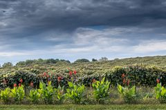 Stormy skies over a Michigan USA vineyard royalty free stock photos