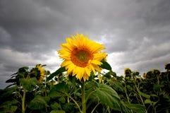 Stormy skies Stock Image