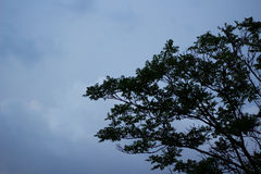 Stormy sky. A blue cloudy sky, where storm clouds are emerging from behind the trees Royalty Free Stock Images