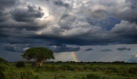 Intact nature, rainbow after storm at African savanna royalty free stock photos
