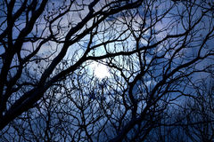 Stormy sky and the full moon seen through the bare branches of t Royalty Free Stock Images