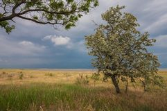 Stormy sky over a field Royalty Free Stock Photo