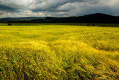 Stormy sky over fields. Scenic view of storm clouds with yellow field in foreground Stock Images