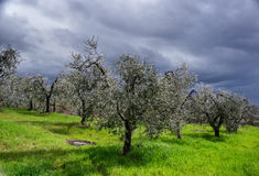 Stormy sky over green field Stock Photography