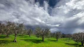 Stormy sky over green field Stock Image
