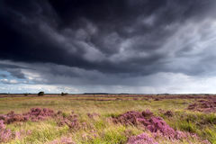 Stormy sky over meadows with heather Stock Photos