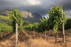 Stormy sky over mountain vineyard Stock Photography