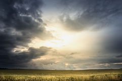 Stormy sky over wheat field Stock Photo