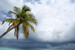 Stormy sky and palm tree Royalty Free Stock Photo