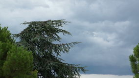 Stormy sky, palm trees and the blue mountains. Stormy sky, fir-trees, palm trees and the blue mountains stock video