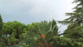 Stormy sky, palm trees and the blue mountains Stock Photo