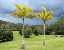 Stormy sky, palm trees, grass lands, scene Stock Images