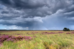 Stormy sky and rainbow over heatherland Royalty Free Stock Image