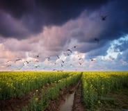 Stormy summer landscape Stock Photos