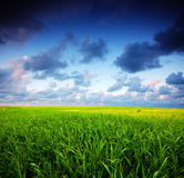 Stormy summer landscape Royalty Free Stock Image