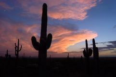 Stormy Sunset. Monsoon storm builds over the desert at sunset Royalty Free Stock Photos