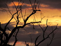 Spooky Sunset with Dead Tree Branches Silhouette Royalty Free Stock Images