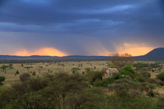 Stormy Sunset Over African Savannah. A sunset through rain clouds on the african savannah royalty free stock images