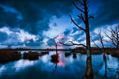 Stormy sunset over bog with dead trees royalty free stock image