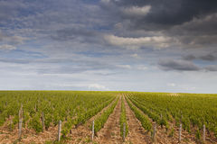 Stormy vineyards. The vineyards of Sancerre in the Loire Valley of France stock image